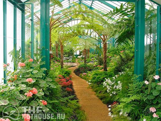 Экзотические растения растут в оранжереях при влажности воздуха 70-80 {6815b3ab4c9e6ce2837070cf2ac7f69ed26a56868599aab1c907de1e9ea31895}