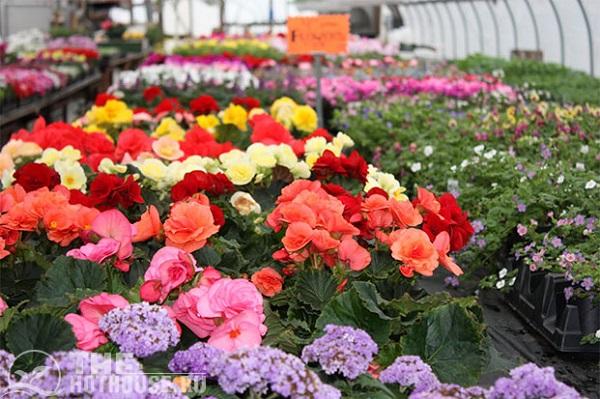 Оранжерея подходит для выращивания цветов
